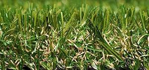 green_meadow